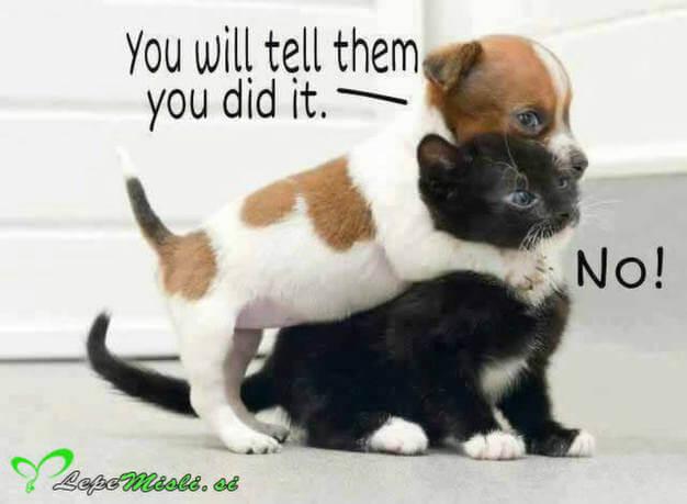 Pes in muca